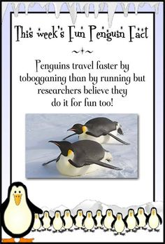 For Readers – Anna Sugden Penguin Facts, Penguins, Anna, Penguin