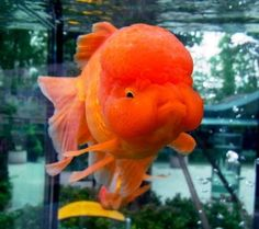I want this fishie!!! So cute ���PrtM