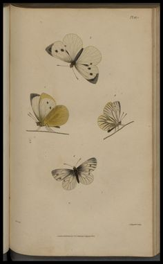 1-2 - Illustrations of British entomology. - Biodiversity Heritage Library