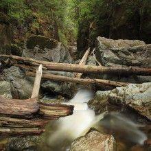 Wild river, Haida Gwaii, BC