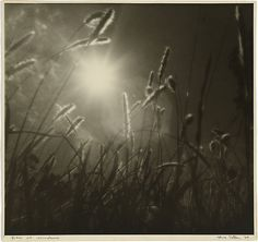 Olive Cotton, Grass at sundown