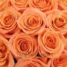 Exotica Rose