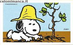 Peanuts Snoopy e i suoi amici: Fronte Figurina n. 58 -