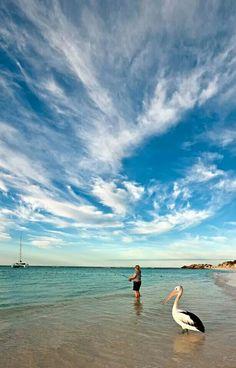 Australia - Rottnest Island - Pelican waiting for a handout on Rottnest Island