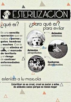#Esterilización. #Mascotas. #HayCosasMásCrueles. #Cruel es matar o abandonar. 😑💪