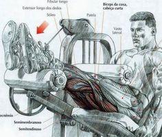 barriga musculos - Google Search