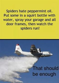 LOL Spider-Begone - the most successful product ever, funded personally by Cabin Six