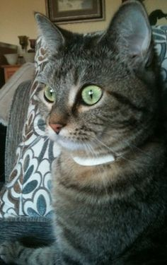 My cat Gracie. Madeline, Dallesport, WA. 10/29/14.