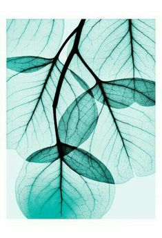 Translucent turquoise leaves