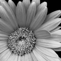 therapy tools and counseling resources- Flourish n Thrive is a resource site for therapists and counselors working in the mental health field. Here you will find therapy ideas and skills training activities to do with kids Black And White Flowers, Black And White Pictures, Black White, Therapy Tools, Play Therapy, Therapy Ideas, Train Activities, Gray Aesthetic, Children With Autism