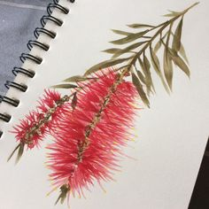 Bottlebrush Flower, available as an all over print on a scarf, as a handkerchief and a cushion cover Watercolor Art Lessons, Pen And Watercolor, Watercolor Flowers, Australian Wildflowers, Australian Native Flowers, Floral Tattoo Design, Flower Tattoo Designs, Brush Tattoo, Wildflower Drawing