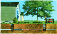 Fix Roots in Your Sewer Pipes Without Killing Trees | Roto-Rooter Blog
