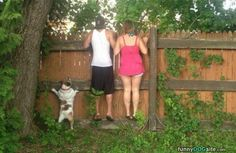 Can I See http://www.funnydogsite.com/pictures/Can_I_See.htm?utm_source=rss&utm_medium=Sendible&utm_campaign=RSS