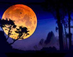 """lua, poesia  """"Dia quente, coração ardente; Sol escaldante, amor distante; Lua cheia, coração cheio; Noite iluminada; Coração de apaixonada."""" - Aline Ignácio Pacheco"""