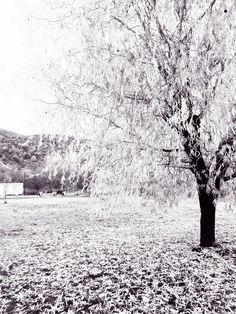 Bw willow tree by Ioanna Papanikolaou via pixels.com and fineartamerica.com