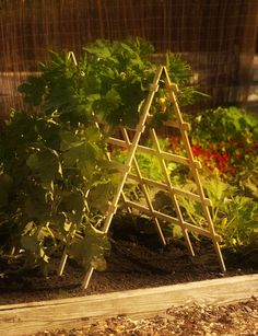 Space saver A-frame for squash, cucumbers, beans... in small space raised bed gardens...
