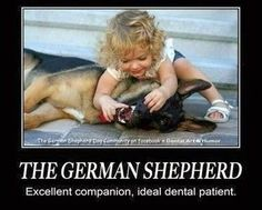 The German Shepherd. Excellent companion, ideal dental patient.  Dentaltown - Dentally Incorrect