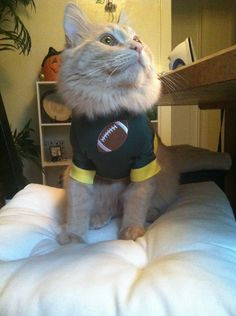 Football star outfit for cat. $13.00, via Etsy.
