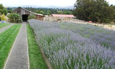 Lavender Bee Farm, Napa CA