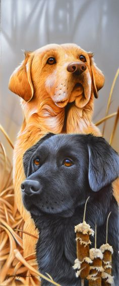 By artist Jerry Gadamus. : By artist Jerry Gadamus. Animal Paintings, Animal Drawings, Homeless Dogs, Labrador Retrievers, Labradors, Dog Portraits, Beautiful Dogs, Dog Art, Pet Birds