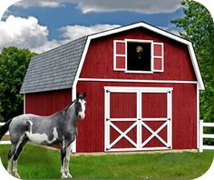 Great shed/barn that can be made into a small/tiny home.  Best Barns Roanoke 16x32 Wood Storage Shed Kit $9,000.