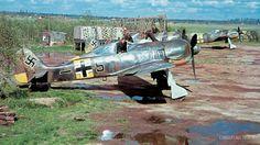 Focke-Wulf Fw 190 German fighter, squadron JG 54 at airfield Siverskaya Aircraft Photos, Ww2 Aircraft, Fighter Aircraft, Military Aircraft, Fighter Jets, Luftwaffe, Image Avion, Focke Wulf 190, Ww2 Pictures