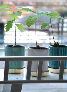 Beautiful pots from Svenskt Tenn Stockholm via Sköna Hem Avocado Plant, Avocado Tree, Indoor Garden, Indoor Plants, Home And Garden, Home Interior, Interior Decorating, Belle Plante, Feng Shui Tips