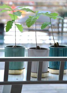 Beautiful pots from Svenskt Tenn Stockholm