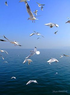 Beautiful Birds, Animals Beautiful, Fancy Video, Sky Photoshop, Cool Pictures, Cool Photos, Image Nature Fleurs, Seagulls Flying, Art Uk