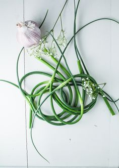 Garlic Scapes | {Katie at the Kitchen Door}