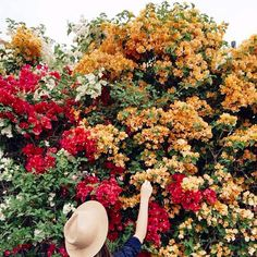 Woman picking flowers by Daniel Kim Photography - Bougainvillea, Flower - Stocksy United