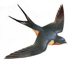 Barn Swallow Tattoo, Swallow Bird Tattoos, Vintage Birds, Vintage Postcards, Vogel Illustration, Sparrow Tattoo, Wildlife Art, Bird Prints, Bird Art