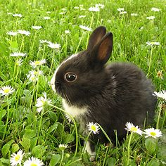 How to Get Rid of Rabbits Living Under Your Deck | Yards ...