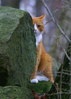 Kitty is checking you out behind the green rocks