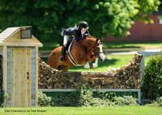Photo by Mollie Bailey. Hunter Horse, Cross Country Jumps, All About Horses, English Riding, Hunter Jumper, Beautiful Horses, Pretty Horses, Show Jumping, Horse Photography
