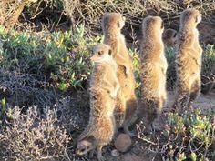 Sunbathing Safari Theme Party, Party Themes, Gang Up, Big Family, Mammals, Habitats, Kangaroo, Have Fun, Adventure