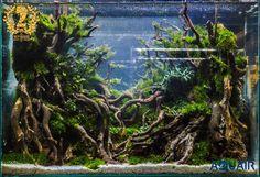 Dick Antonio - Day Community Battle 2016 Date: Sat, April Nano Aquarium, Aquarium Design, Aquarium Fish Tank, Aquarium Driftwood, Fantasy Castle, Aquatic Plants, Plant Design, Terrariums, Animal Kingdom