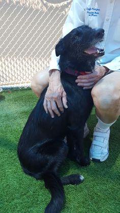 Meet Chimney - an adoptable pet Dog   lostourhome.org Tempe AZ   SharE!