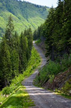 When I say ride, emerald paths fall into my mind. - When I say ride, emerald paths fall into my mind. Beautiful Roads, Beautiful Landscapes, Beautiful World, Beautiful Places, Back Road, Amazing Nature, Belle Photo, The Great Outdoors, Countryside