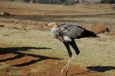 Dullstroom bird of prey rehab