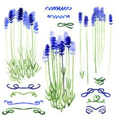 Set of watercolor design elements: lavender and ribbons