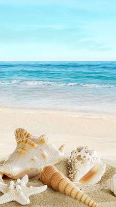 Nature Sunny Ocean Seaside Beach Shells #iPhone #5s# wallpaper
