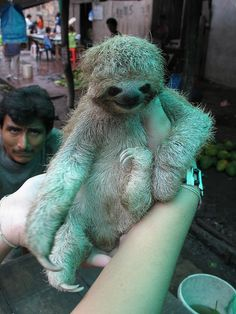 I can't tell which is funnier. The sloth or the man making the exact same face in the background.