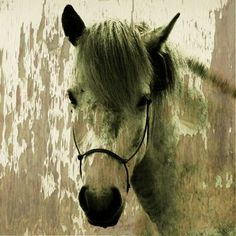 giclee+processed+horse+art   Tan Horse with Bridle' Giclee Canvas Art   Overstock.com Shopping ...