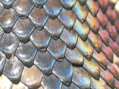 Close up scales with glowing colours Tattoos Motive, Snake Scales, Les Reptiles, Reptile Skin, Cane Stick, The Wiz, Trees To Plant, Colours, Shapes
