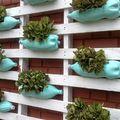 jardín vertical con suculentas