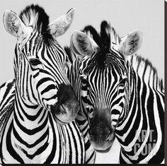 Namibia Zebras Stretched Canvas Print by Nina Papiorek at Art.com