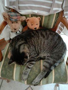 Ich bin immer so müde und super faul ! Mäuse Jagen können andere für mich erledigen !🐱
