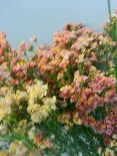 høstblomst
