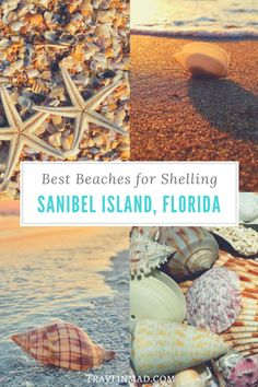 Where can you find the best beaches for shelling on Sanibel Island Sanibel Island beaches in southwest Florida are teeming with gorgeous seashells. Heres your ultimate guide to Sanibel shelling how when where to find the best beaches and the most shells. Sanibel Florida, Florida Vacation, Florida Travel, Florida Beaches, Sanibel Beach, Florida Trips, Sandy Beaches, Fort Myers Beach Florida, Siesta Key Florida